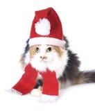 Gatto di natale di Tricolored Fotografia Stock Libera da Diritti
