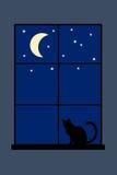 Gatto di notte Fotografie Stock Libere da Diritti