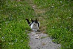 Gatto di posa Immagine Stock