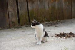 Gatto di posa Fotografie Stock