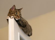 , Gatto di riposo sulla cima della porta nel fondo della luce della sfuocatura, fine divertente sveglia del gatto a su, piccolo ga Immagine Stock Libera da Diritti