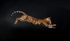 Gatto di salto Fotografie Stock Libere da Diritti