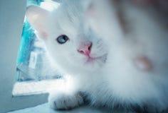 Gatto di Selfi fotografia stock