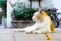 gatto di sguardo fisso Fotografia Stock Libera da Diritti