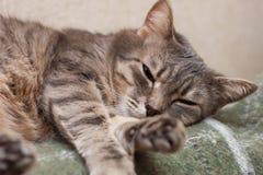 Gatto di sonno Immagine Stock Libera da Diritti