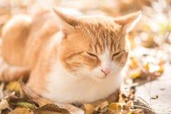 Gatto di sonno fotografie stock