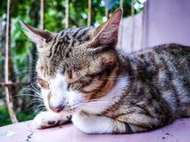 Gatto di sonno Immagine Stock