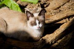 Gatto di sonno al sole Fotografie Stock Libere da Diritti
