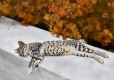 Gatto di sonno in autunno Immagini Stock