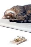 Gatto di sonno con il mousetrap Fotografia Stock Libera da Diritti