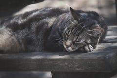 Gatto di sonno sul ritratto del banco di legno fotografie stock libere da diritti