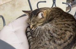 Gatto di sonno sulla sedia in caffè Fotografie Stock Libere da Diritti