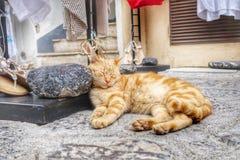 Gatto di sonno sulla via Fotografia Stock Libera da Diritti