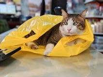 Gatto di soriano adorabile che gioca con il sacchetto di plastica giallo sulla tavola immagini stock libere da diritti