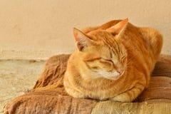 Gatto di soriano arancio sonnolento sul vecchio cuscino marrone a casa Immagine Stock Libera da Diritti