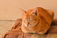 Gatto di soriano arancio sonnolento sul vecchio cuscino marrone a casa Fotografia Stock