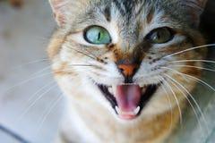 Gatto di soriano commovente fotografie stock