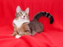 Gatto di soriano con gli occhi di giallo che si trovano tranquillamente Fotografie Stock Libere da Diritti