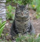 Gatto di soriano dagli occhi verdi splendido nel giardino Immagini Stock Libere da Diritti