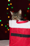 Gatto di soriano dentro una scatola del regalo di Natale Fotografia Stock Libera da Diritti