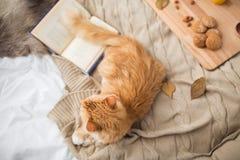 Gatto di soriano rosso che si trova sulla coperta a casa nell'inverno Immagini Stock Libere da Diritti