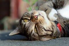 Gatto di soriano sul tetto di tettoia Immagine Stock