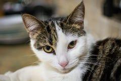 Gatto di soriano sveglio Fotografia Stock Libera da Diritti