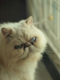 Gatto di sorriso Fotografia Stock