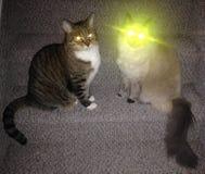 Gatto di superpotenze Immagini Stock