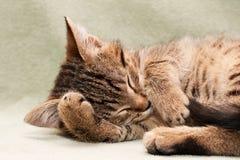 Gatto di Tabby che si trova sulla base immagine stock