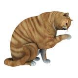 Gatto di tabby rosso Fotografia Stock