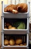Gatto di verdure della cremagliera Fotografie Stock Libere da Diritti