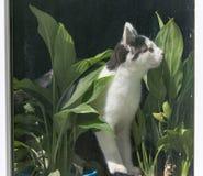 Gatto dietro una finestra di vetro immagine stock