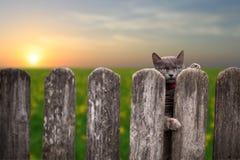 Gatto dietro una rete fissa Fotografie Stock Libere da Diritti