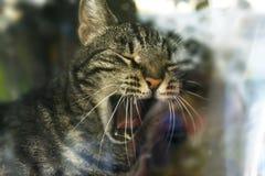 Gatto dietro vetro fotografia stock libera da diritti