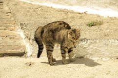 Gatto difensivo fotografie stock libere da diritti