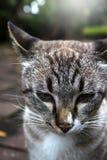 gatto diGiocattolo-GER Fotografie Stock Libere da Diritti