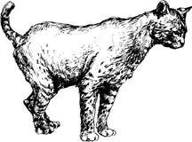Gatto disegnato a mano Fotografia Stock Libera da Diritti