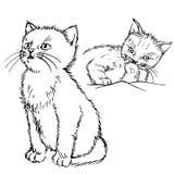 Gatto disegnato a mano Immagine Stock