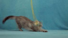 Gatto divertente che gioca con poco coniglietto del giocattolo video d archivio