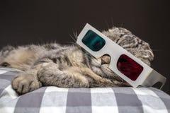 Gatto divertente che guarda un film sulla televisione in vetri 3D Fotografie Stock