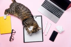 Gatto divertente che si trova sulla scrivania e che gioca con le palle di carta sgualcite fotografie stock