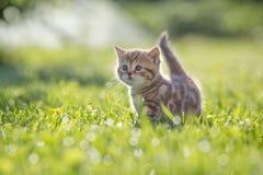Gatto divertente che sta nell'erba verde immagini stock