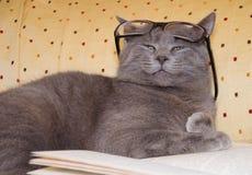 Gatto divertente con gli occhiali fotografie stock