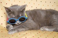 Gatto divertente con gli occhiali da sole Immagini Stock Libere da Diritti