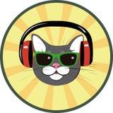 Gatto divertente con le cuffie e gli occhiali da sole Immagine Stock