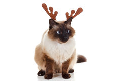 Gatto divertente dell'animale domestico della renna di Rudolph di Natale Immagine Stock Libera da Diritti