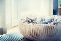 Gatto divertente dolce nel canestro dei gatti sopra il fondo della finestra Il gatto che esamina predatore la macchina fotografic Fotografia Stock