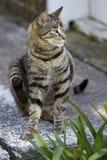 Gatto domestico che si siede fuori Fotografia Stock Libera da Diritti