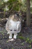 Gatto domestico che si siede sulla terra, Immagine Stock Libera da Diritti
